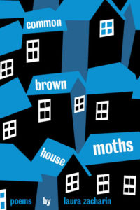 Common Brown House Moths